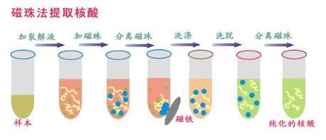 磁珠法核酸提取仪结构